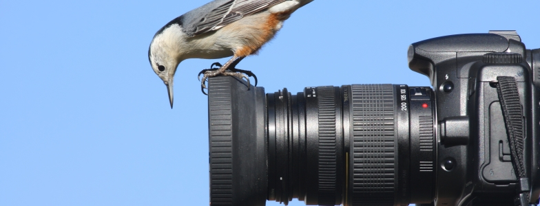 a bird perched on top of a camera lense