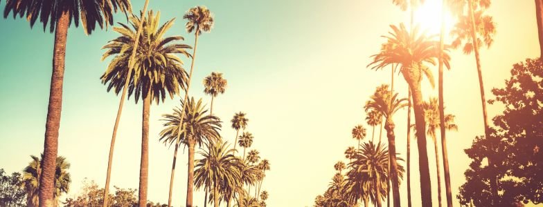 palm trees lining the streets of los angeles