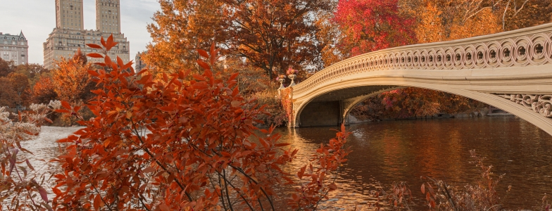 Bow Bridge in Central Park during Autumn