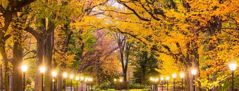 Fall Foliage and lights line a pathway in Central Park New York City